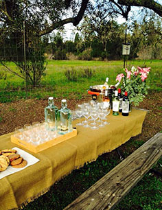 Lovely Sonoma County Setting, Private Wine Tours in Santa Rosa, CA